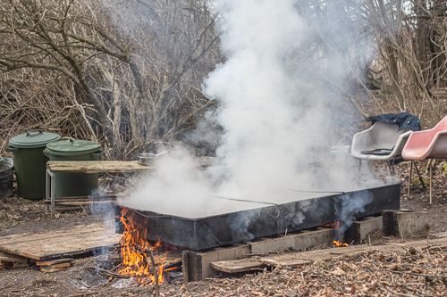 Maple sap boiling off