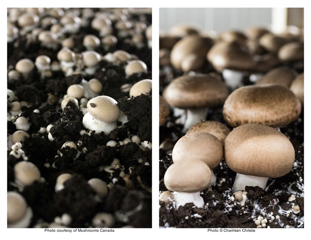 Mushrooms growing - TheMessyBaker.com