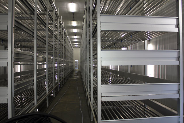 Empty mushroom racks - How Mushrooms are grown - TheMessyBaker.com