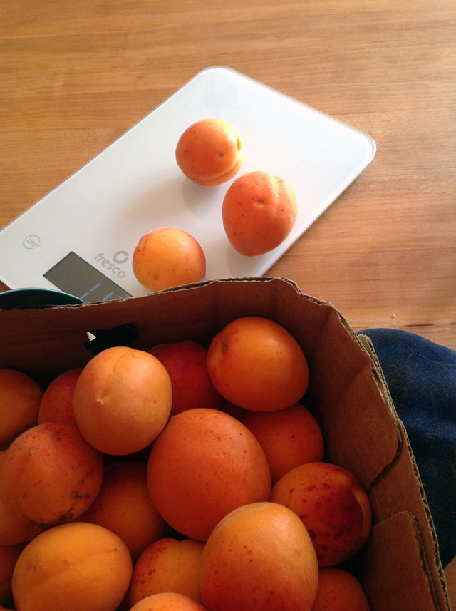 Apricots being weighed for jam - TheMessyBaker.com
