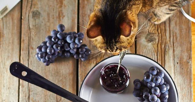 Cat likes Concord Grape Jam